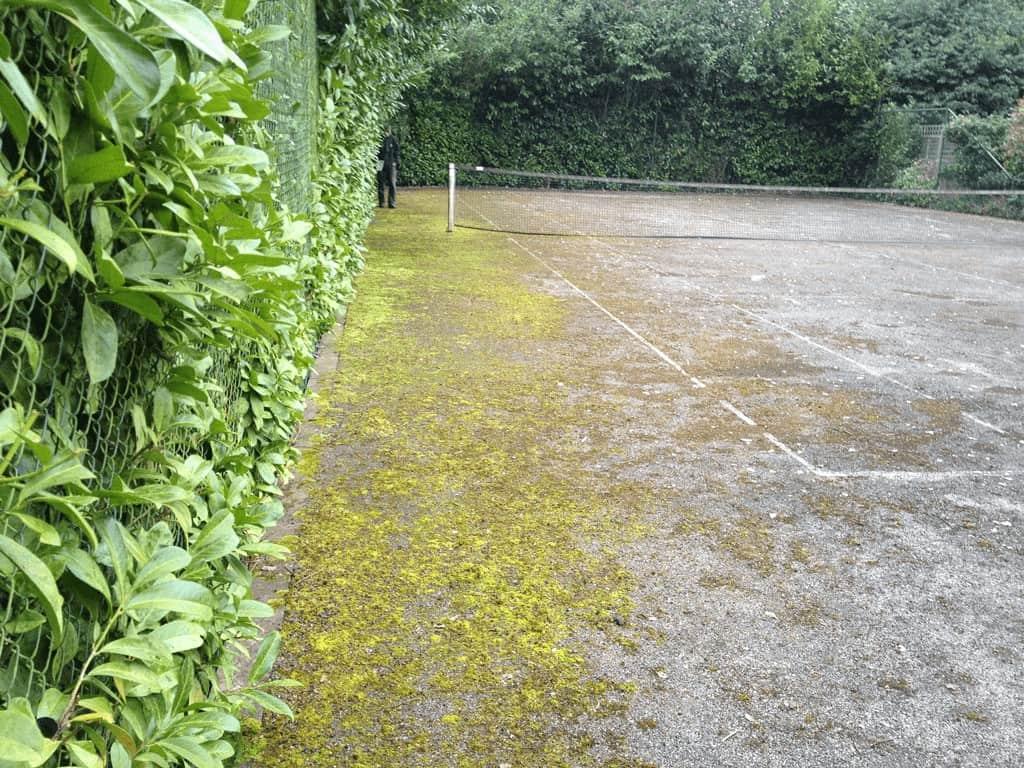 A moss infected macadam tennis court
